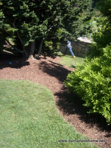 M running behind a shrub at the Arnold Arboretum