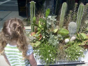 succulents and cacti in a flower box by closed shop