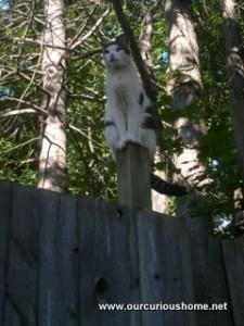 Kiki stuck on a fence post