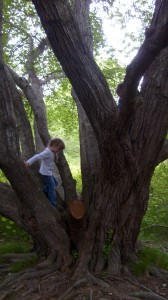 K climbing in a oak tree
