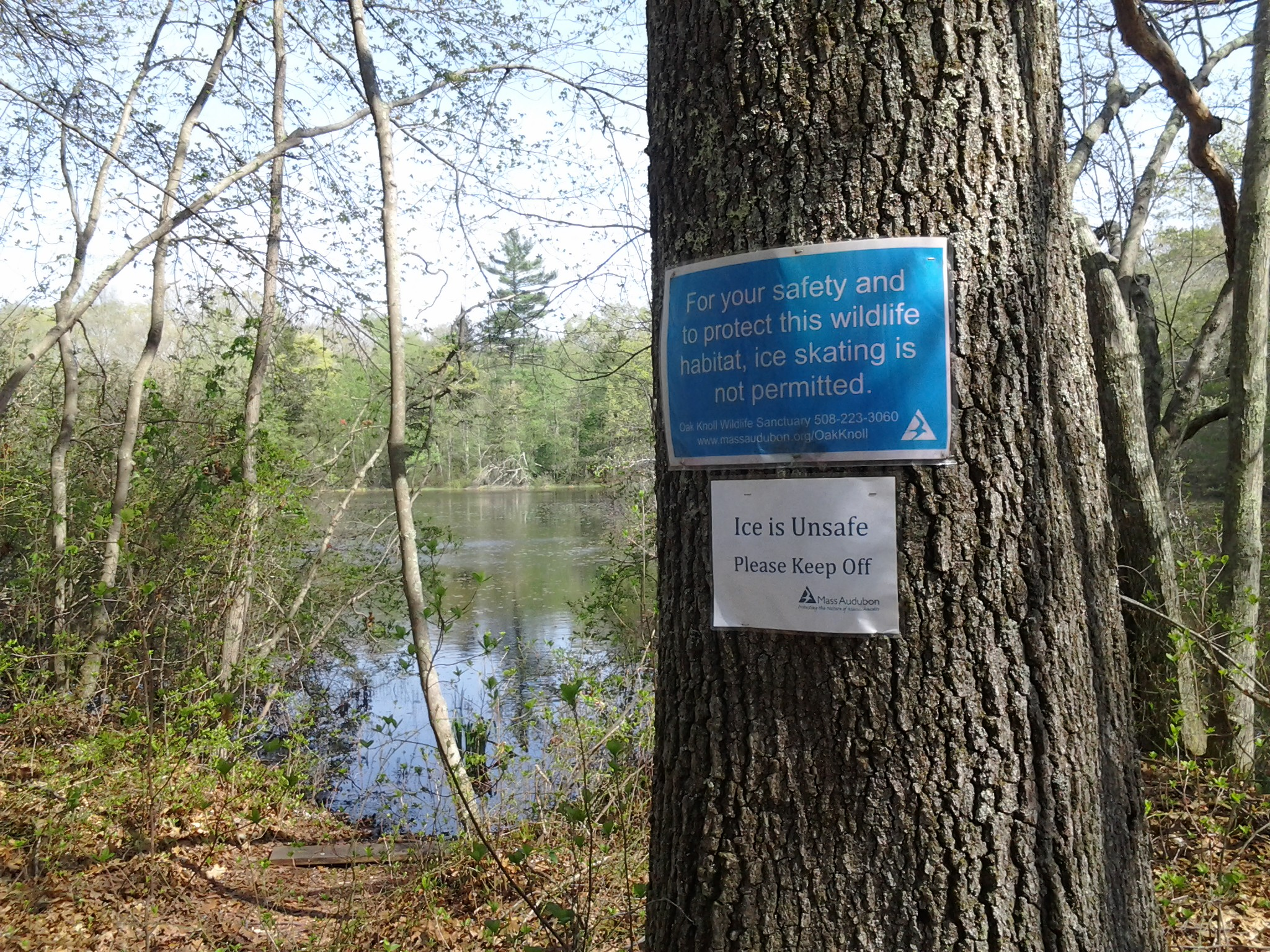 "a sign someone forgot to take down at Lake Talaquega which reads, ""For you safety and to protect this wildlife habitat ice skating is not permitted."""