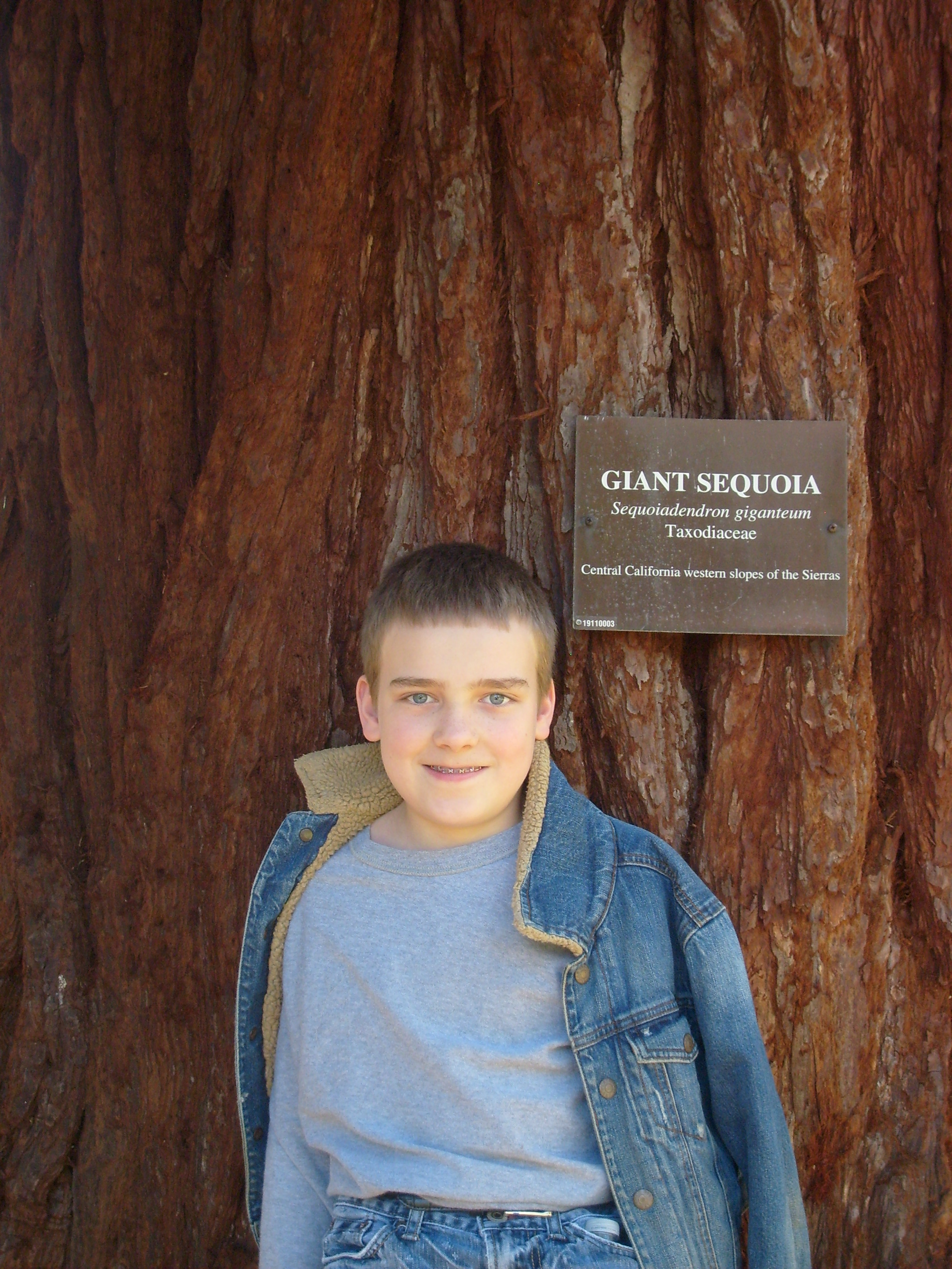 M in front of the Giant Sequoia at Blythewold Mansion and Gardens