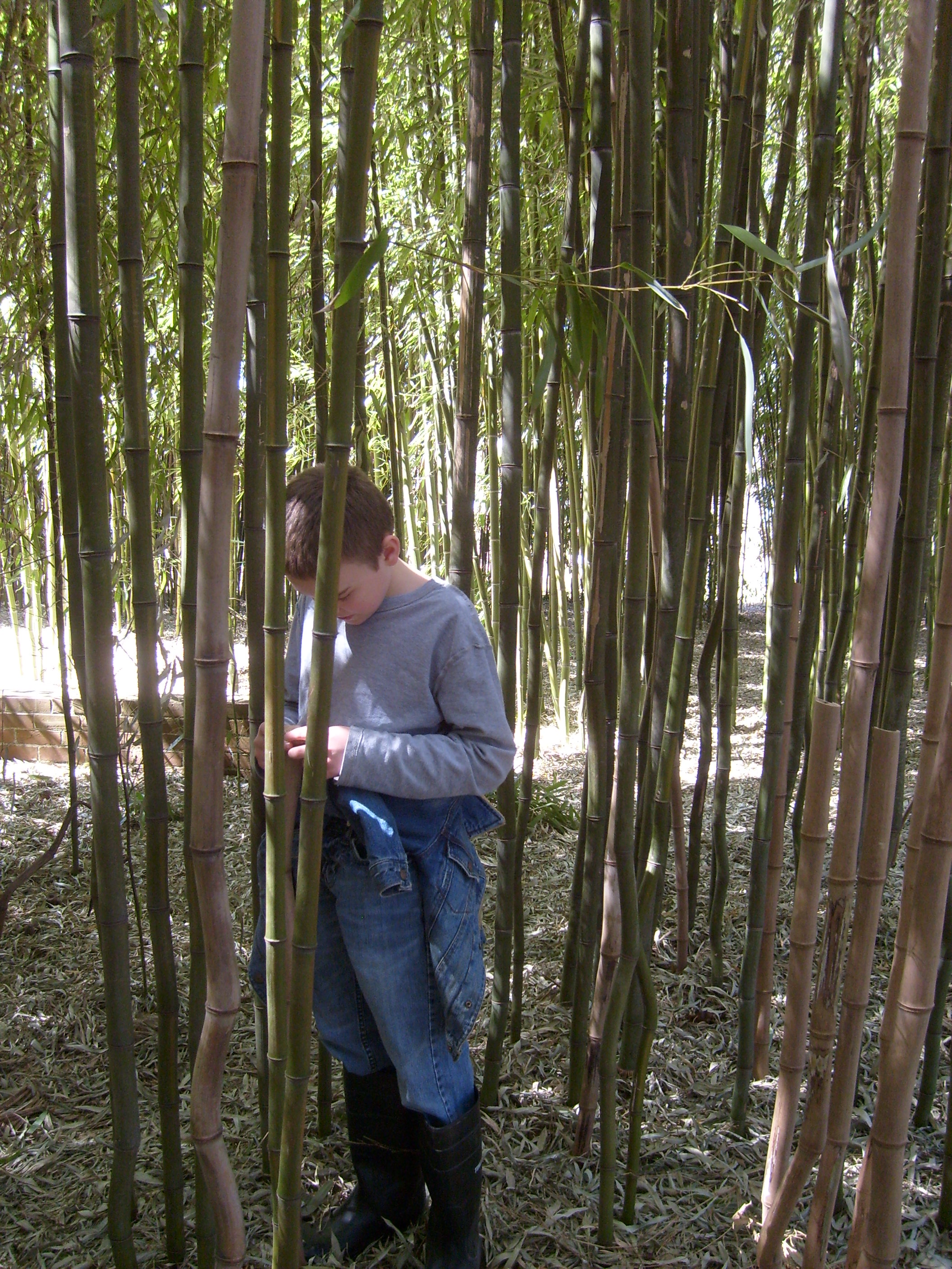 M counting for  hide and go seek in the bamboo grove
