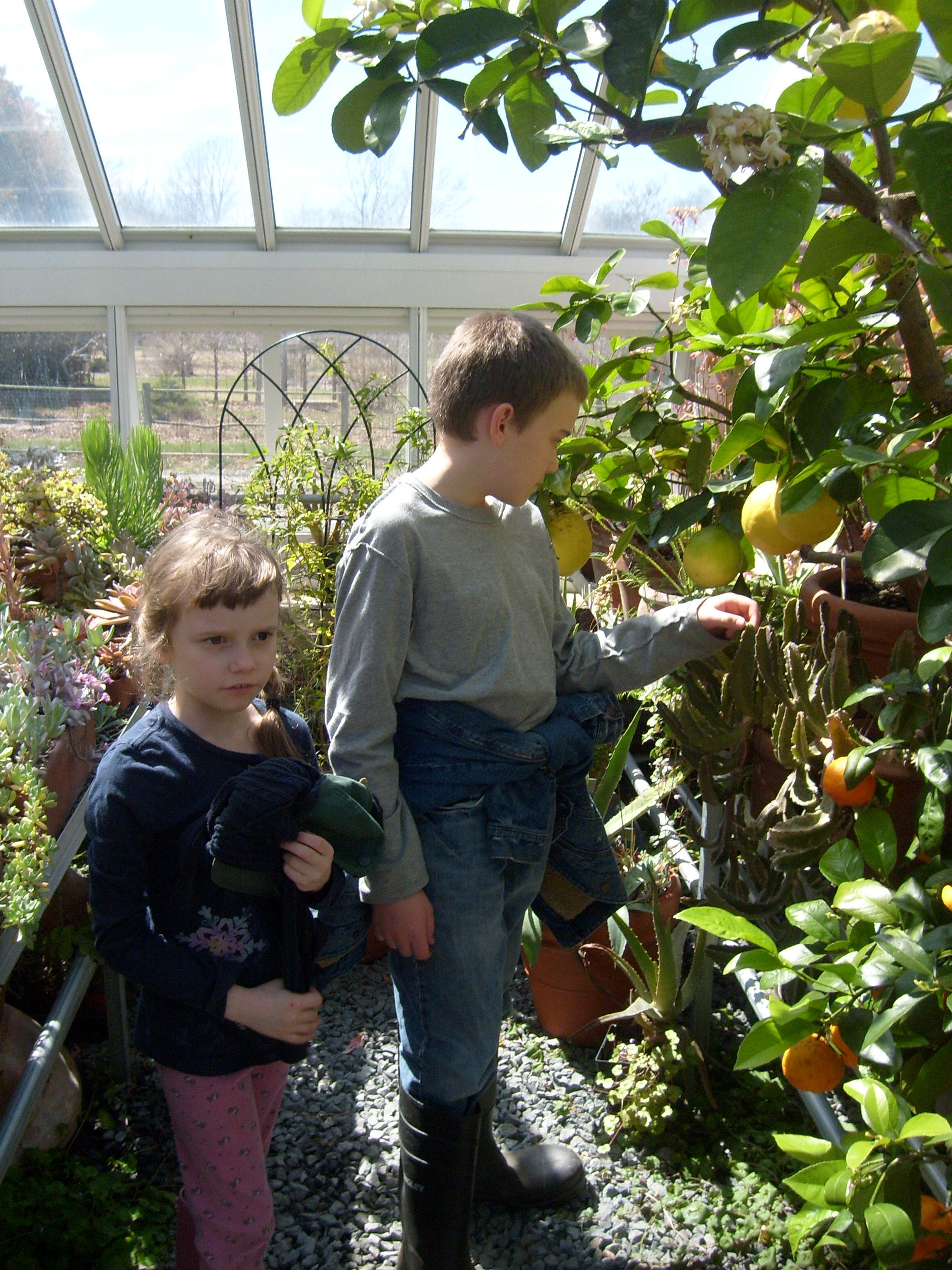 K and M in the greenhouse at Blythwold by the American Wonder Lemons