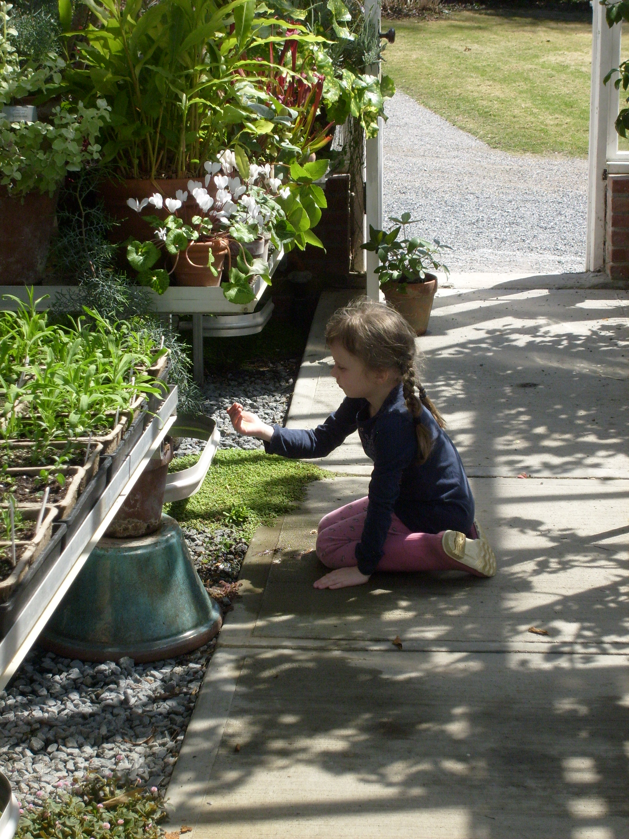 K in the greenhouse at Blythwold