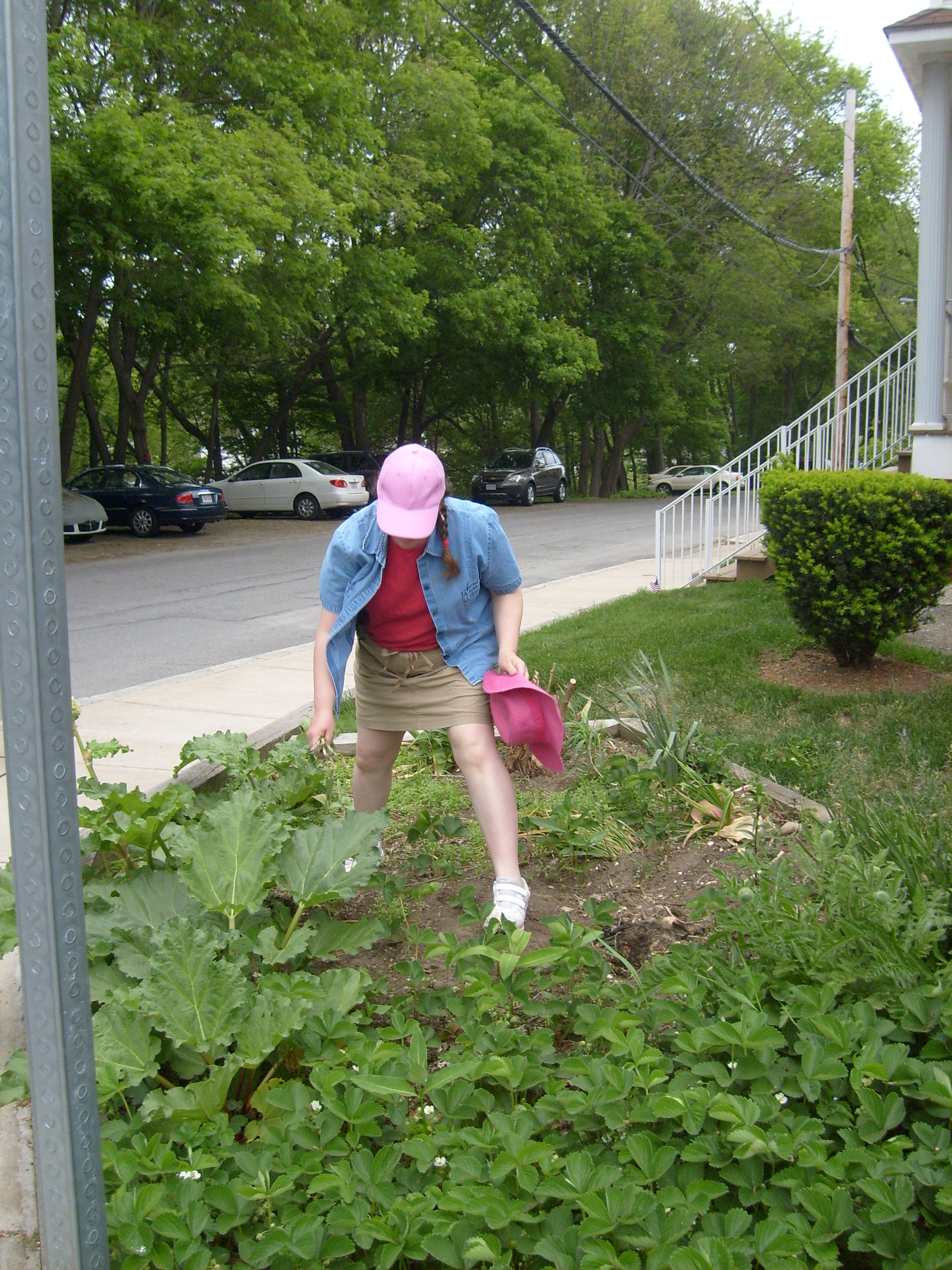 me weeding the strawberries and rhubarb