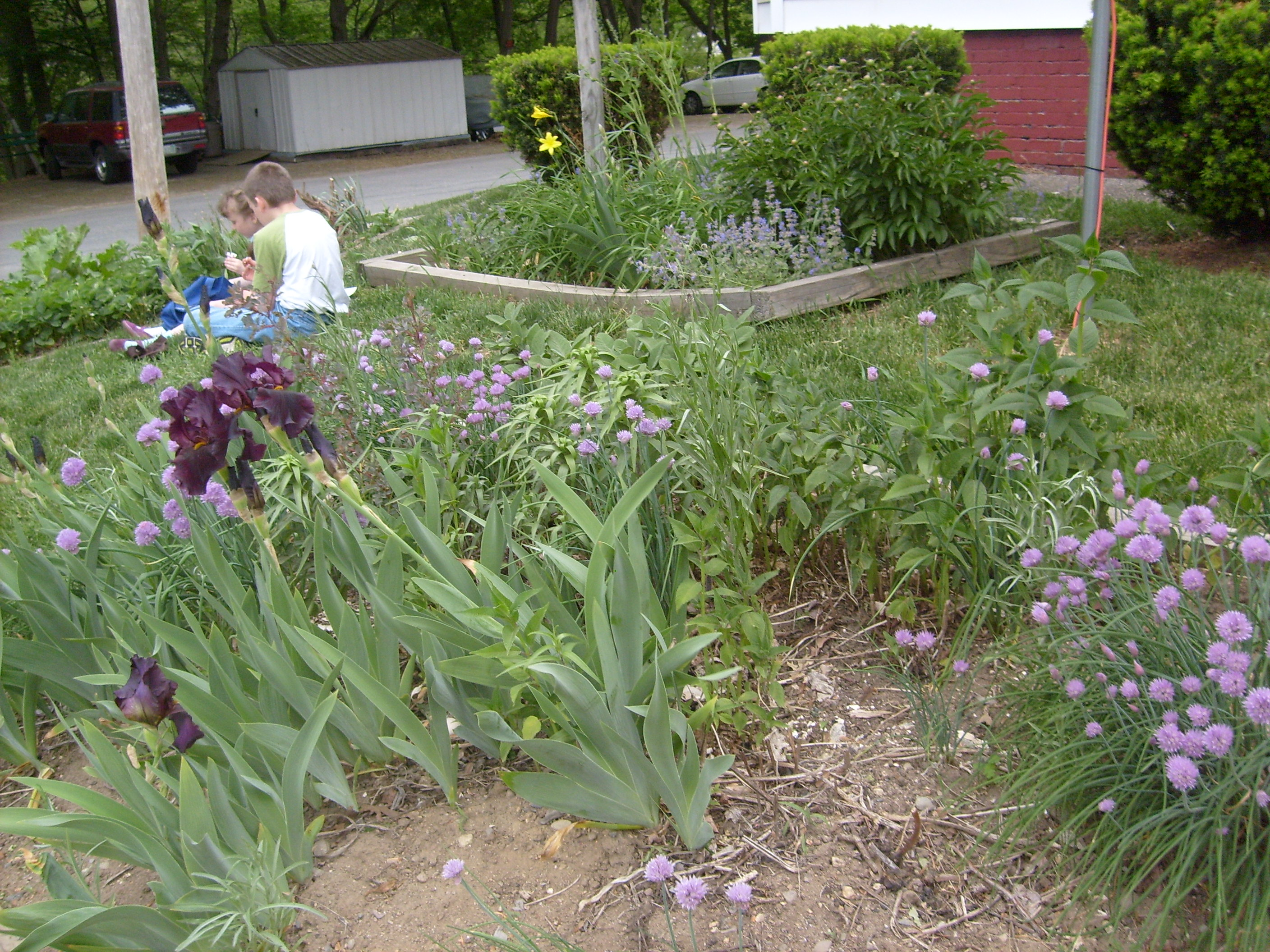 The purple Iris and chive blossoms, with M and K trading candy in the background on Memorial Day