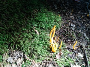 strange, tall, orange mushrooms at Purgatory Chasm