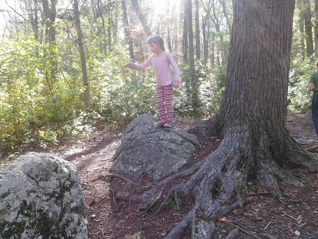 K on a smaller puddingstone rock next to a 200 year old Hemlock Tree