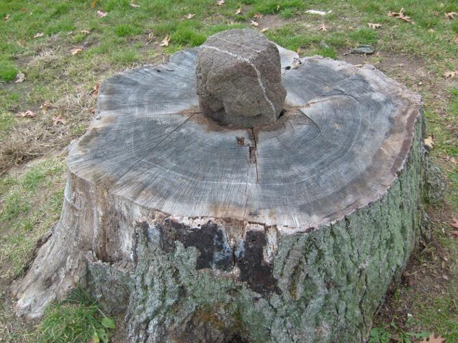 the stump and stone in the park