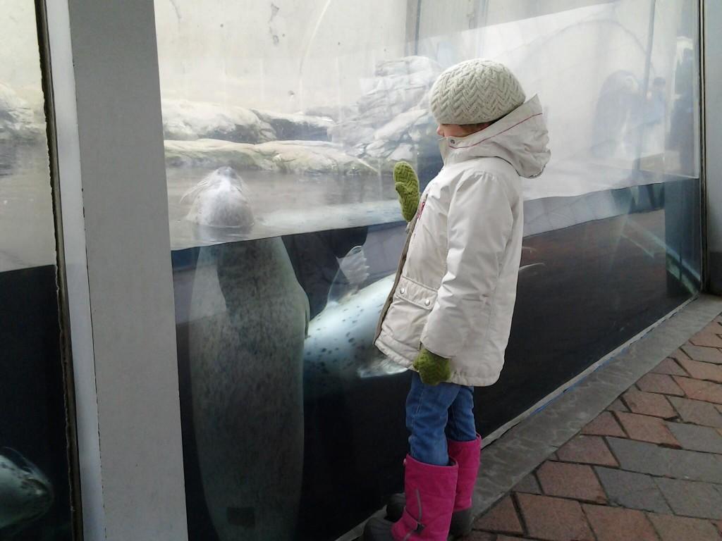 K high-5-ing the harbor seal