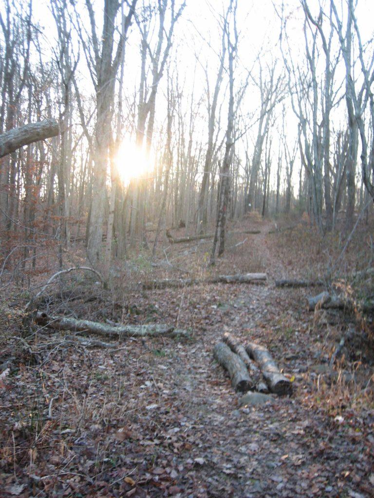 sun setting through the trees along the trail