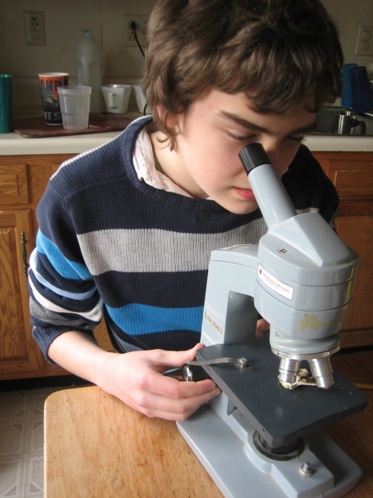clearer picture of M looking into the microscope